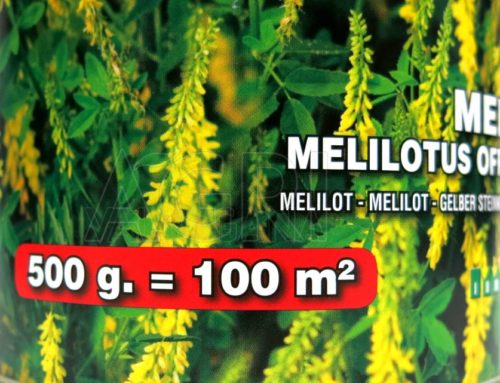 le mellifere Meliloto gr500
