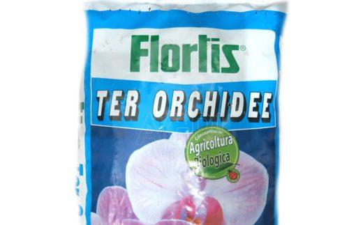 flortis ter orchidee lt_5