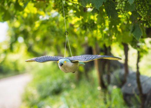Falco spaventapasseri_Stocker